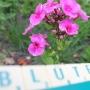 08-bluete